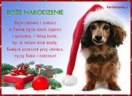 eKartki Boże Narodzenie Bożonarodzeniowy Jamnik,