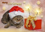 eKartki Boże Narodzenie Prezent od kotka,