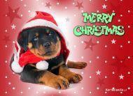 eKartki Boże Narodzenie Świąteczny kumpel,