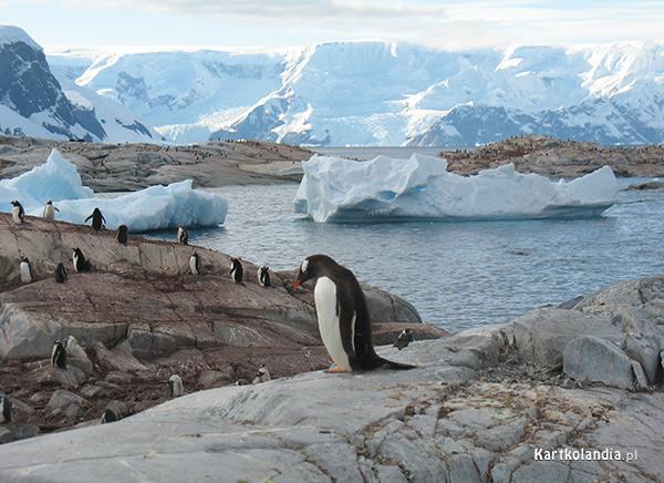 Życie na Antarktydzie