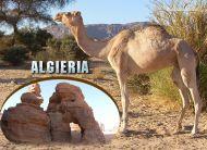eKartki Państwa, Miasta e-Kartka z Algierii,
