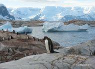 eKartki Państwa, Miasta Życie na Antarktydzie,