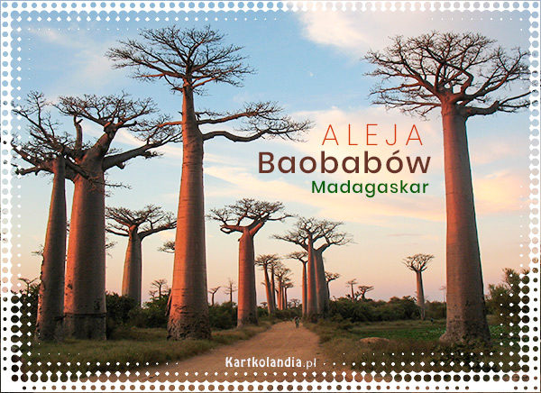 Madagaskar - Aleja Baobabów