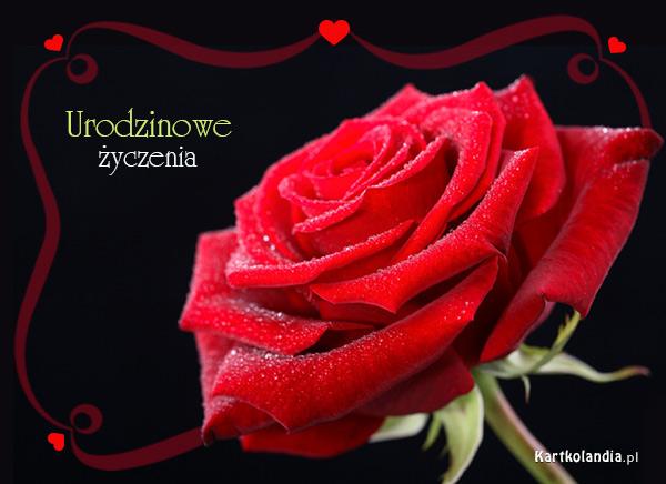 Urodzinowa róża