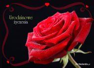 eKartki Urodzinowe Urodzinowa róża,