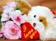 eKartki Miłość - Walentynki Wierny miłości,