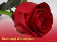 eKartki Miłość - Walentynki Kochanej Walentynce,