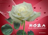 eKartki Miłość - Walentynki Róża dla ukochanej,