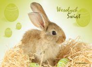 eKartki Wielkanoc Z okazji świąt,