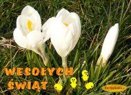 eKartki Wielkanoc Wielkanoc w kwiatach,