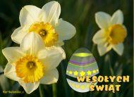 eKartki Wielkanoc Wielkanocne narcyzy,