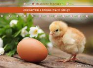 eKartki elektroniczne z tagiem: e-Kartki wielkanocne Wielkanocne kurczątko,