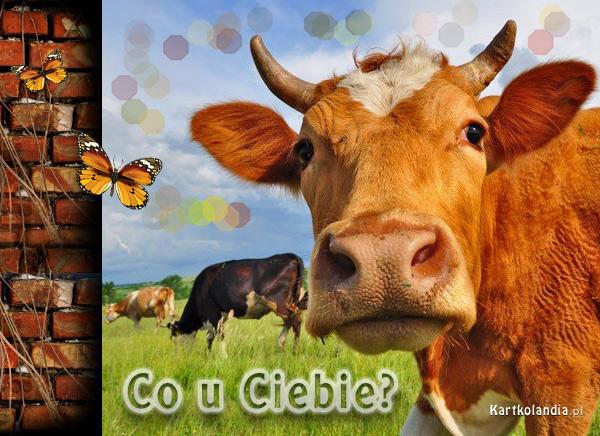 eKartki elektroniczne z tagiem: Krowa Co u Ciebie?,