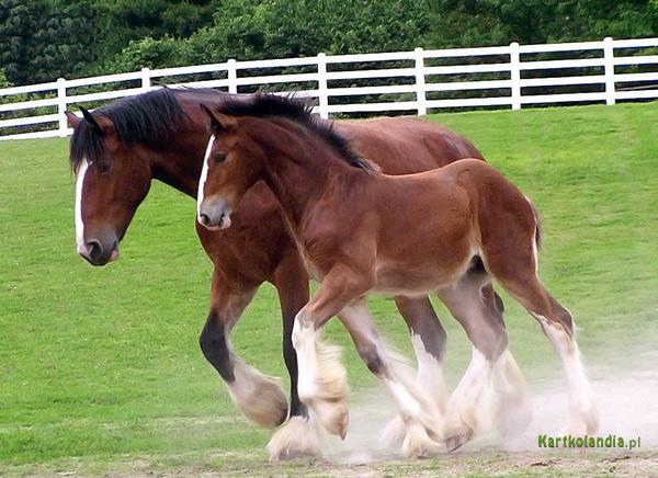 Cudne konie