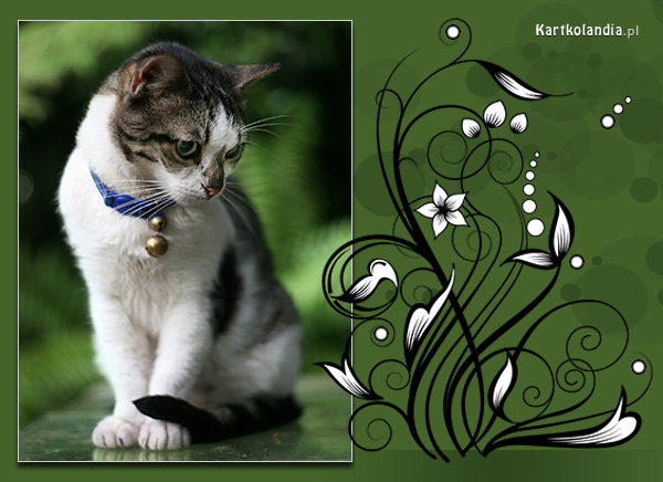 Kartka z kotkiem