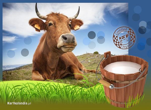 eKartki elektroniczne z tagiem: Krowa Prosto z natury,
