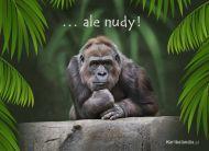 eKartki elektroniczne z tagiem: Kartki z małpą Ale nudy,
