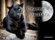eKartki Zwierzêta Czarna pantera,