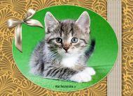eKartki Zwierzêta e-Kartka z kotkiem,