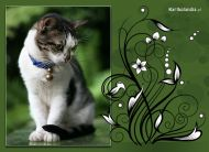 eKartki Zwierzêta Kartka z kotkiem,