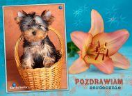 eKartki elektroniczne z tagiem: e-Kartki zwierzêta Kartka z pieskiem,
