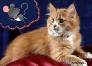 eKartki elektroniczne z tagiem: e-Kartka z kotem Koci instynkt,