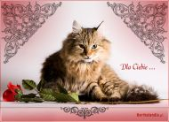 eKartki elektroniczne z tagiem: Kartki zwierzęta Koci urok,