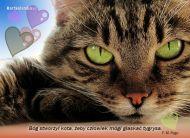 eKartki elektroniczne z tagiem: e-Kartka z kotem Kocie oczy,