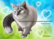eKartki Zwierzêta Kot,