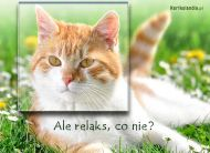 eKartki Zwierzęta Leniwy kotek,