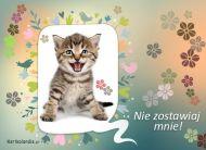 eKartki elektroniczne z tagiem: e-Kartka z kotem Nie zostawiaj się,