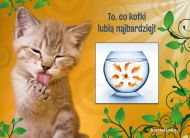 eKartki elektroniczne z tagiem: Kartki zwierzęta Pokusa kotka,