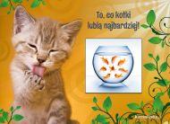 eKartki elektroniczne z tagiem: e-Kartka z kotem Pokusa kotka,