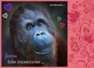 eKartki elektroniczne z tagiem: e-Kartka z małpką Rozmarzona,