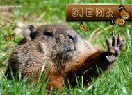 eKartki elektroniczne z tagiem: Kartki zwierzęta Siema,