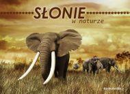 eKartki Zwierzêta S³onie w naturze,
