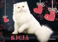eKartki elektroniczne z tagiem: e-Kartka z kotem Śnieżnobiała kicia,