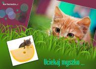 eKartki elektroniczne z tagiem: e-Kartka z kotem Uciekaj myszko,