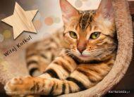eKartki elektroniczne z tagiem: Kartki zwierzęta Witaj Kotku,