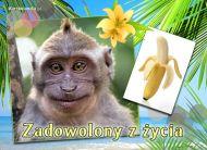 eKartki elektroniczne z tagiem: Kartki z małpą Zadowolony z życia,