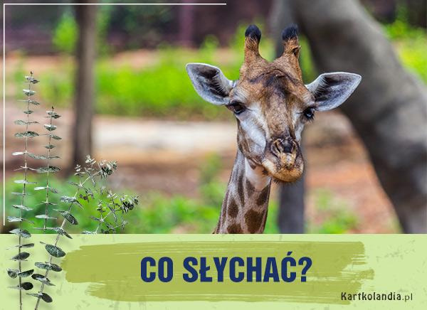 eKartki elektroniczne z tagiem: Kartki z żyrafą Co słychać?,