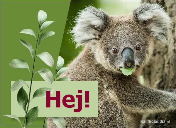 eKartki elektroniczne z tagiem: Kartki zwierzęta Hej!,