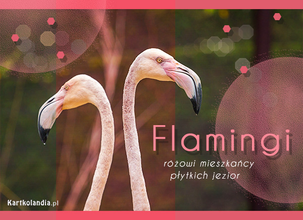 eKartki elektroniczne z tagiem: Kartki zwierzęta Kartka - Flamingi,