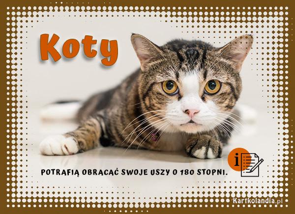 eKartki elektroniczne z tagiem: Kot Kocie uszy,