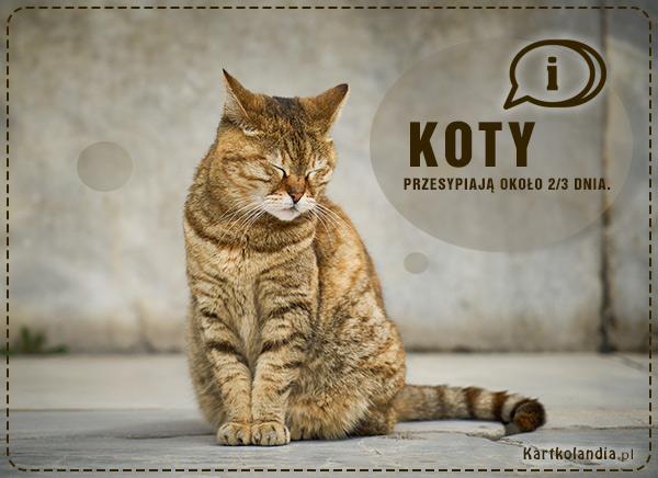 eKartki elektroniczne z tagiem: Kot Kot,