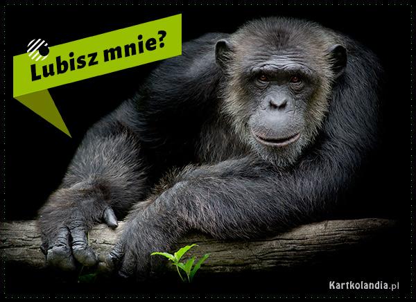 eKartki elektroniczne z tagiem: Kartki zwierzęta Lubisz mnie?,