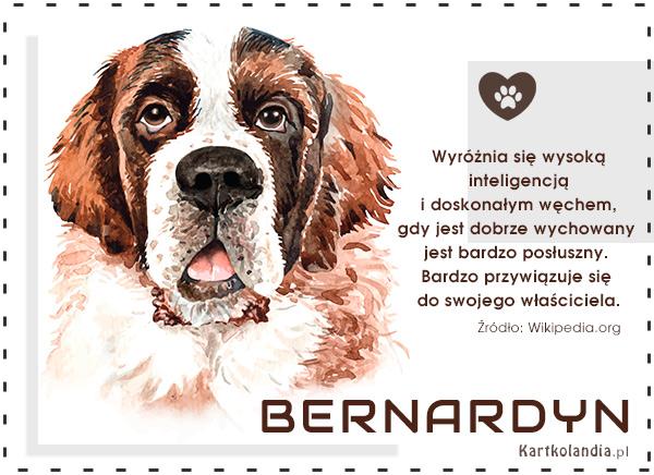 eKartki elektroniczne z tagiem: Kartki zwierzęta Pies Bernardyn,