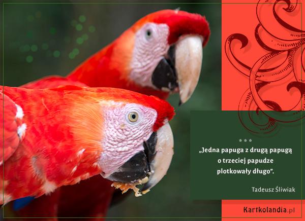 eKartki elektroniczne z tagiem: Papuga Plotkary,