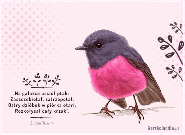 eKartki elektroniczne z tagiem: Ptak Ptak,