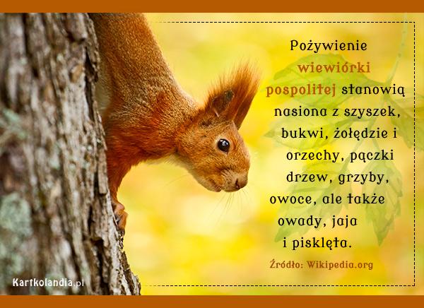 eKartki elektroniczne z tagiem: Kartki zwierzęta Smakołyki wiewiórki,